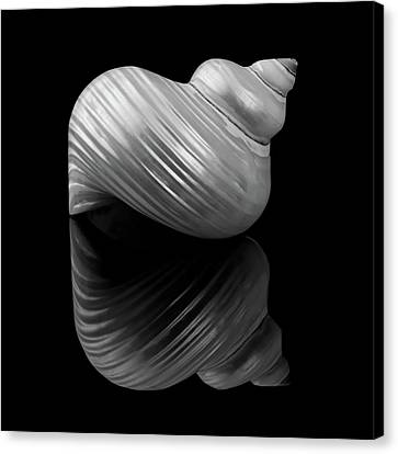 Polished Turban Shell And Reflection Canvas Print by Jim Hughes