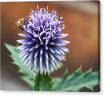 Canvas Print featuring the photograph Pollen Rustler by Trever Miller