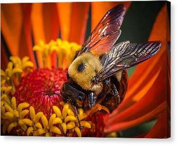 Pollen Plenty Canvas Print by Bruce Pritchett