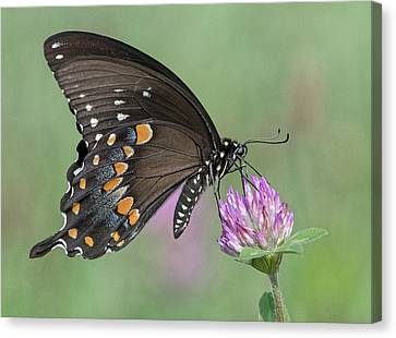 Canvas Print featuring the photograph Pollinating #1 by Wade Aiken