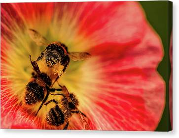 Pollination Canvas Print by Verena - Timschenko