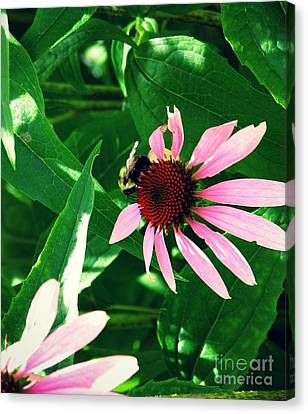 Pollinize Canvas Print
