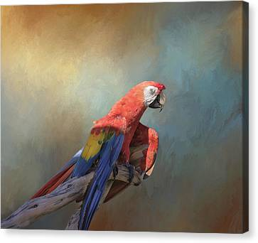 Polly Want A Cracker Canvas Print