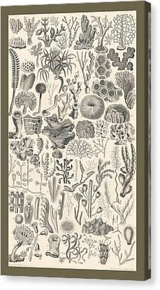 Polypi Canvas Print