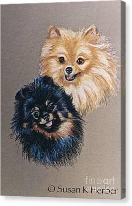 Pomeranian Pair Canvas Print by Susan Herber