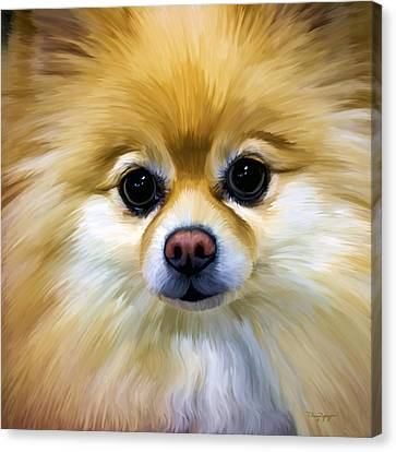 Puppy Canvas Print - Pomeranian by Thanh Thuy Nguyen