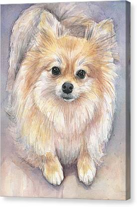 Pomeranian Watercolor Canvas Print by Olga Shvartsur