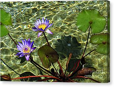 Pond Florals Canvas Print by Clayton Bruster