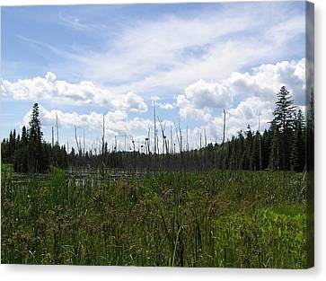 Pond In A Distance Canvas Print by Richard Mitchell