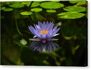 Aesthetic Canvas Print - Pond Lily by Garry Gay