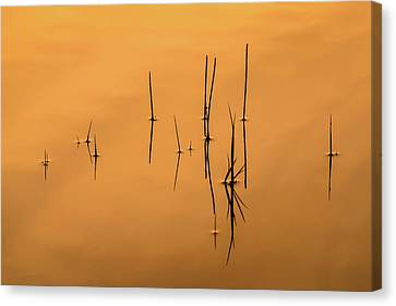 Pond Reeds In Reflected Sunrise Canvas Print