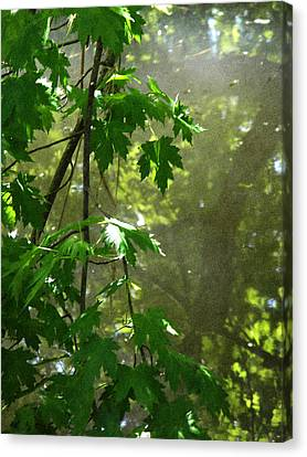 Pond Reflection 2 Canvas Print
