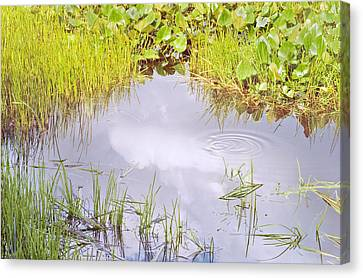 Pond Ripples Photo Canvas Print