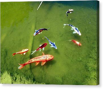 Pond With Koi Fish Canvas Print by Joseph Frank Baraba