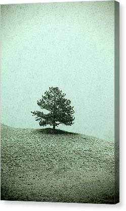 Ponderosa Pine Canvas Print by Todd Klassy