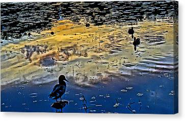 Pondscape Canvas Print