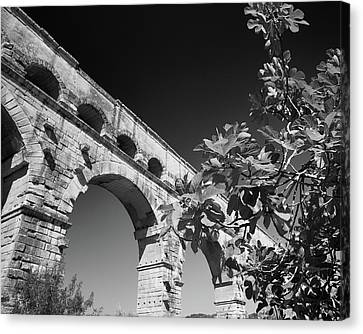 Canvas Print featuring the photograph Pont Du Gard And Fig Tree by Richard Goodrich