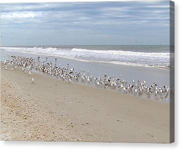 Ponte Vedra Birds Canvas Print