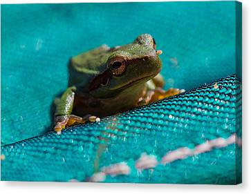 Canvas Print featuring the photograph Pool Frog by Richard Patmore