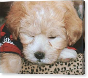 Canvas Print featuring the photograph Pooped Pup by Diane Merkle