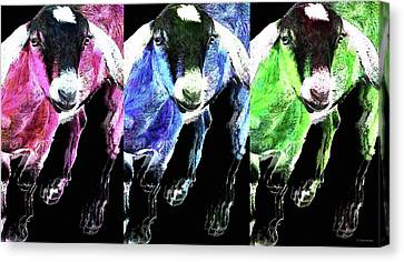 Pop Art Goats Trio - Sharon Cummings Canvas Print by Sharon Cummings