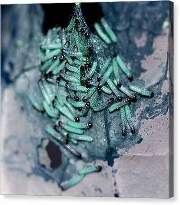 Canvas Print featuring the photograph Pop Macro No. 1 by Laura Melis