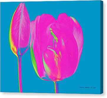 Pop Spring Tulips  Canvas Print