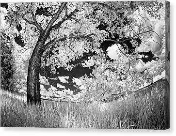 Canvas Print featuring the photograph Poplar On The Edge Of A Field by Dan Jurak