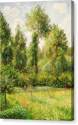 Canvas Print featuring the painting Poplars - Eragny by Camille Pissaro