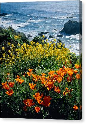 Poppies Along Coast Ca Usa Canvas Print by Panoramic Images
