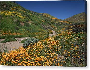 Canvas Print featuring the photograph Poppies Along Riverbed by Cliff Wassmann