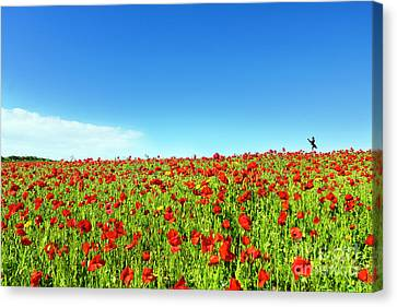 Poppies And A Photographer Canvas Print by Terri Waters
