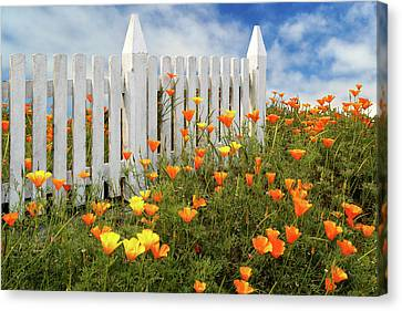 Canvas Print featuring the photograph Poppies And A White Picket Fence by James Eddy