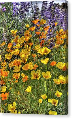 Canvas Print featuring the photograph Poppies And Lupines by Jim and Emily Bush