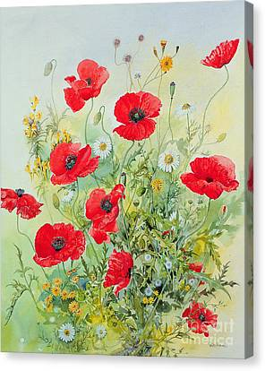 White Flower Canvas Print - Poppies And Mayweed by John Gubbins