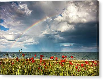 Poppies And Rainbow By The Sea Canvas Print