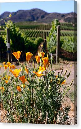 poppies and Vines Canvas Print by Gary Brandes