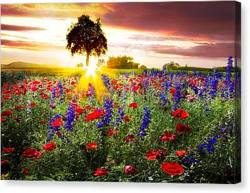 Poppies At Sunset Canvas Print by Debra and Dave Vanderlaan