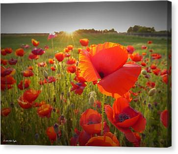 Poppies At Sunset Canvas Print by Matt Taylor