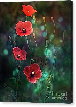 Poppies Fairytale Canvas Print by Agnieszka Mlicka