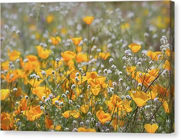 Canvas Print featuring the photograph Poppies Fields Forever  by Saija Lehtonen