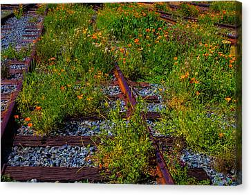 Poppies Growing Among The Rails Canvas Print by Garry Gay