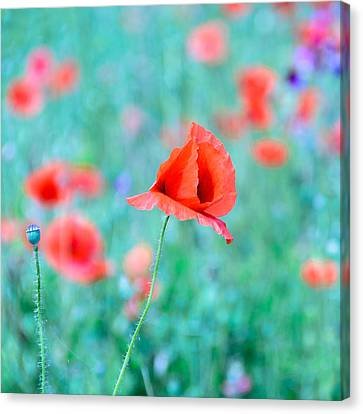 Canvas Print featuring the photograph Poppies In A Field by Marion McCristall