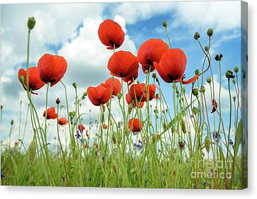 Poppies In Field Canvas Print by Jelena Jovanovic