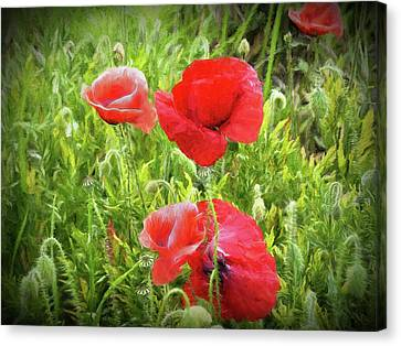 Poppies In Paris Canvas Print