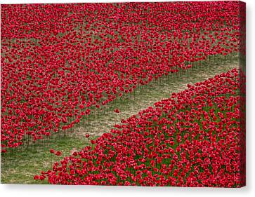 Poppies Of Remembrance Canvas Print by Martin Newman