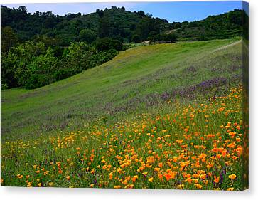 Poppies On The Hillside Canvas Print by Kathy Yates