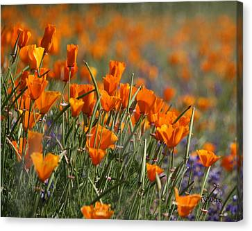 Canvas Print featuring the photograph Poppies by Patrick Witz