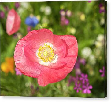Poppy 2017-1 Canvas Print