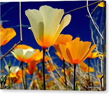 Poppy Canvas Print by Adam Jones